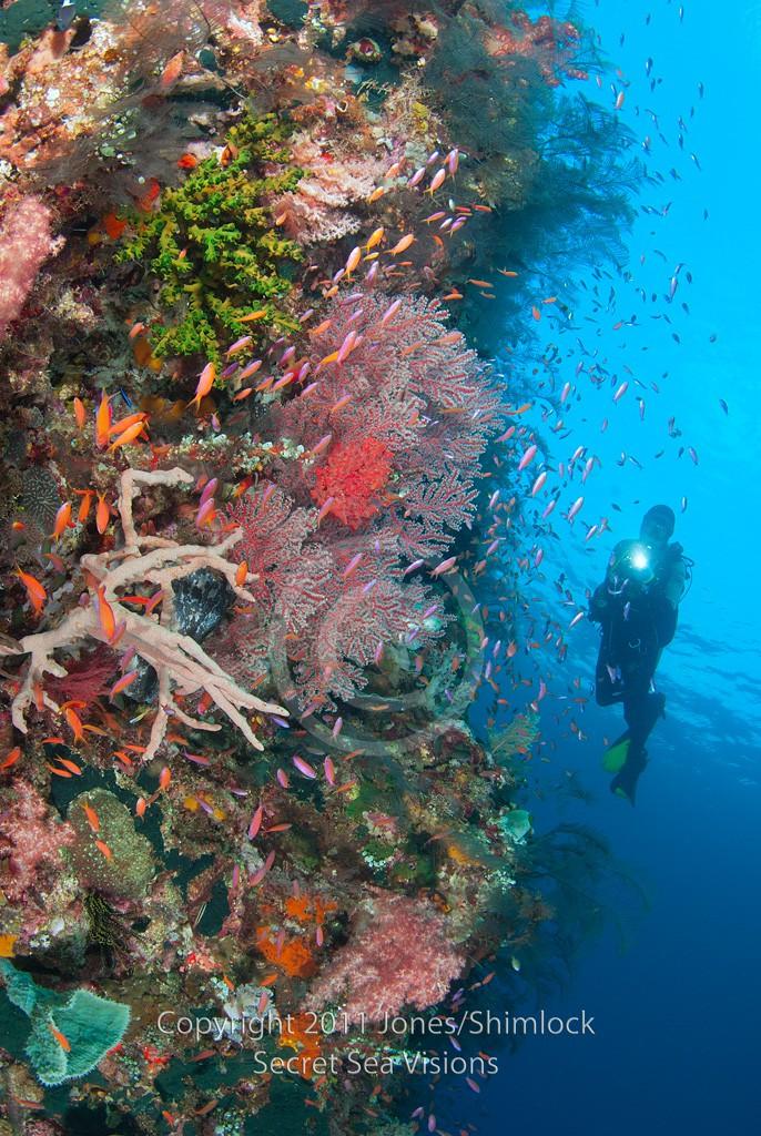 Reef Scenic w/ Diver